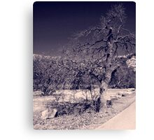 Curved Road Canvas Print