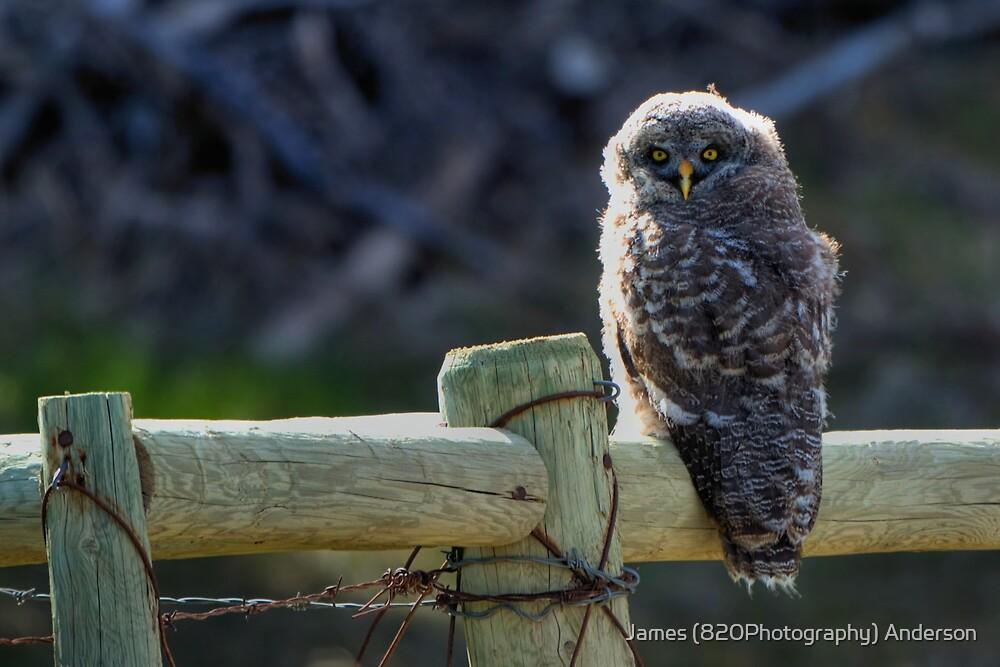 Intense Stare by JamesA1