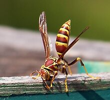 Yellow Jacket by Penny Odom