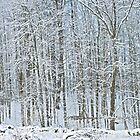 Spring Snow 2 by Carolyn Clark