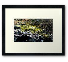 Moss on a rock Framed Print