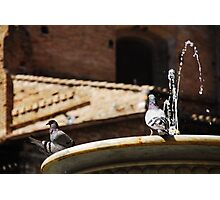 Pigeons on Water Fountain Photographic Print