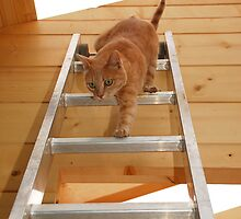 Ginger Tom Descending Ladder by jojobob