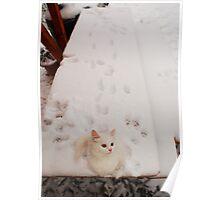 Kitten on Snowy Table Poster