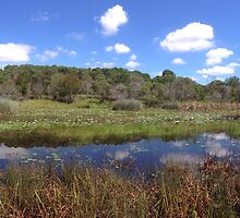 Short Panorama Shot of Berrinba Wetlands Lake by Benny Lamera