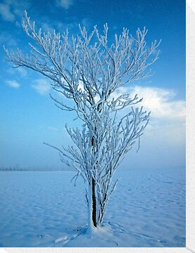 Frozen Tree II, Northern Ireland by Ludwig Wagner