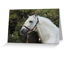 Andalusian Stallion II Greeting Card