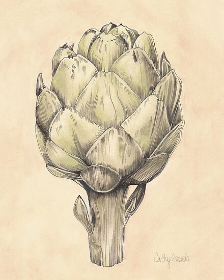 Artichoke I Print by cathy savels