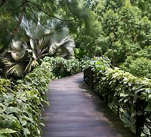 A raised walking path inside the National Orchid Garden in Singapore by ashishagarwal74