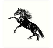 Hand drawn Wild Horse   Art Print