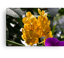 A cluster of beautiful yellow and orange orchids Canvas Print