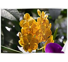 A cluster of beautiful yellow and orange orchids Poster
