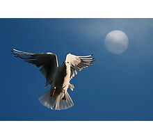 Time to Roost Photographic Print