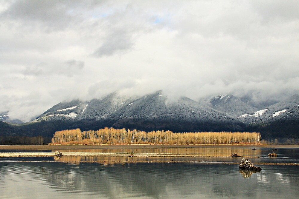 Lines of Gold by Tracy Friesen