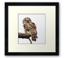 Barred Owl: The Inteloper Framed Print