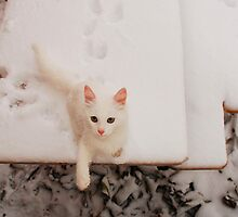 White Kitten on Snowy Table by jojobob