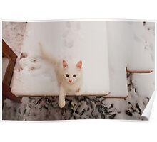 White Kitten on Snowy Table Poster