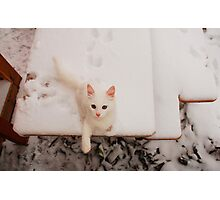 White Kitten on Snowy Table Photographic Print
