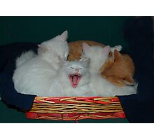 Kittens in Basket with Uncle Vlad Photographic Print