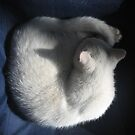 White Cat on Blue Chair by jojobob