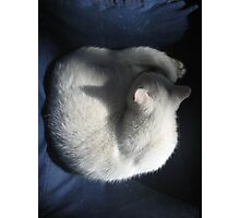 White Cat on Blue Chair Photographic Print