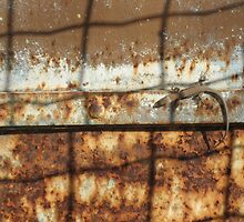 Lizard on Rusted Metal 2 by jojobob