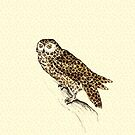 The Jaguar Owl by Paula Belle Flores
