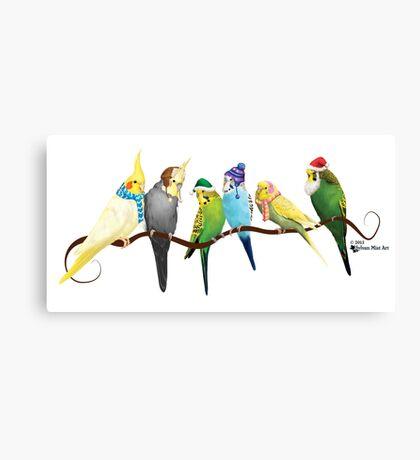 Winter Parakeets & Cockatiels  Canvas Print