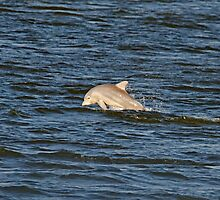 My First Dolphin Shot by Photography by TJ Baccari