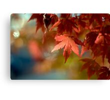 Japanese Maple Red Canvas Print