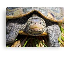Turtle Up Close Looking at Me Canvas Print