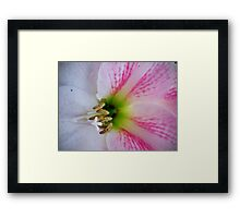 Heart of the Amaryllis Framed Print
