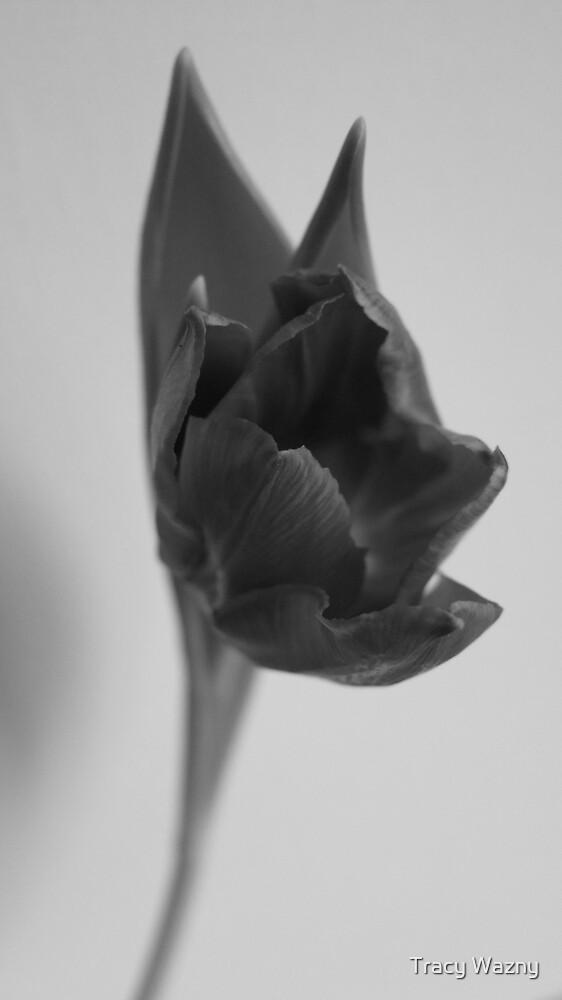 Tulip - B&W by Tracy Faught