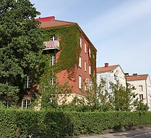 house with ivy by mrivserg