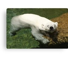 Polar Bear Hanging Out Canvas Print