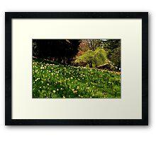 Daffodil Hill Framed Print