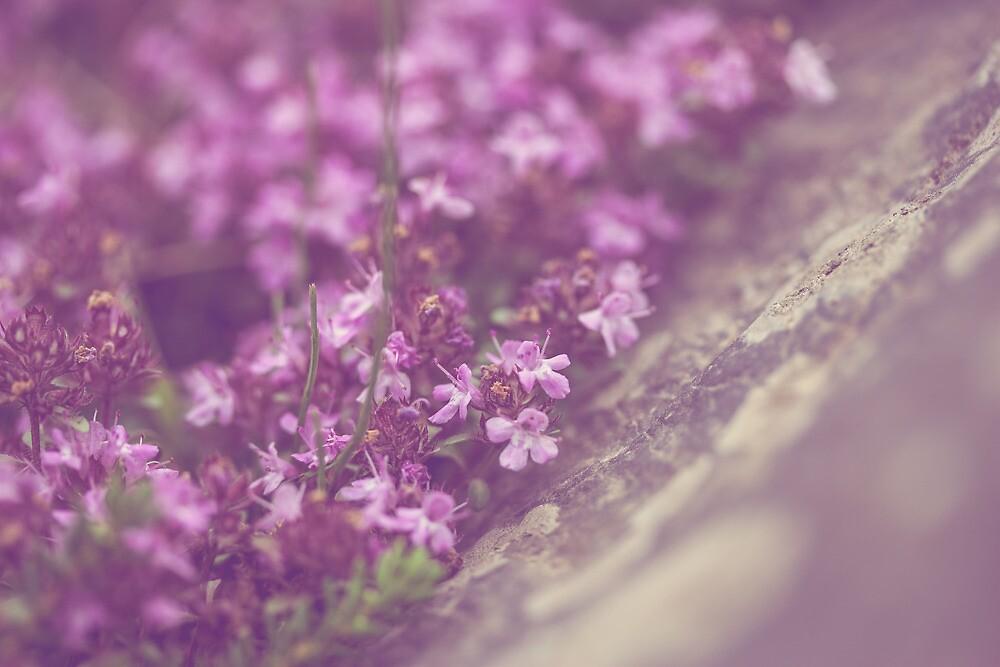 flowers on rock by JorunnSjofn Gudlaugsdottir