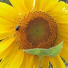 Sunflower and Friend by Guy Ricketts