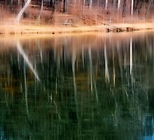 The Trees of Maple Lake by Brian Gaynor