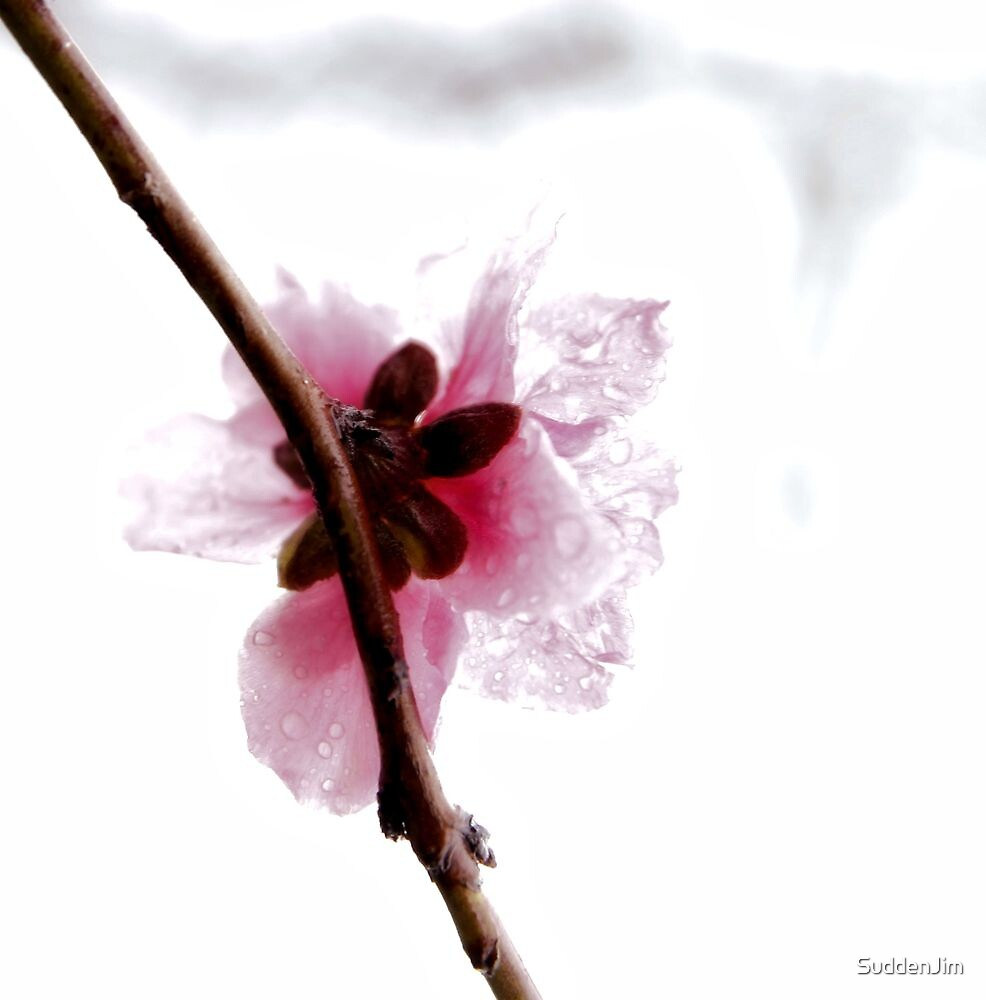 Dew by SuddenJim