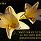easter lilies with psalm 98:4 by dedmanshootn
