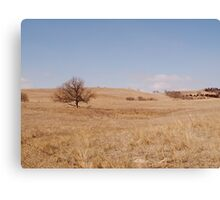 Lonely Tree on the Prairie Canvas Print