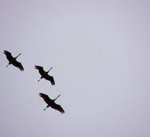 Sandhill Cranes Overhead by BettyEDuncan
