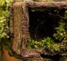 Rust Plants by Lars Clausen
