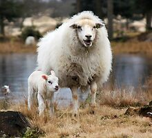 It is Spring - Mother Sheep with Lamb by Jo Nijenhuis
