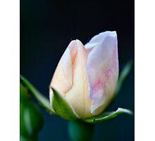 Precious Rose Bud Photographic Print