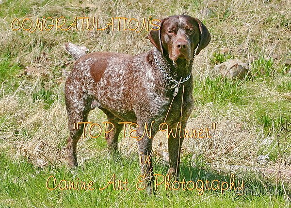 Banner : Canine Fine Art & Photography by AnnDixon