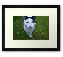 Manx Cat Framed Print
