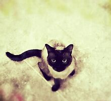 cat roma by mgirax