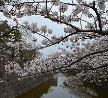 Sakura 7 by Fike2308